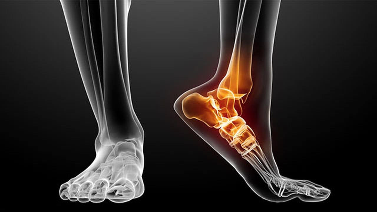 Heel pain symptoms, anatomy of the foot
