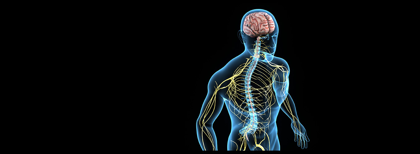 Neuro Muscular Skeletal Disorder, neuro muscular physical therapy