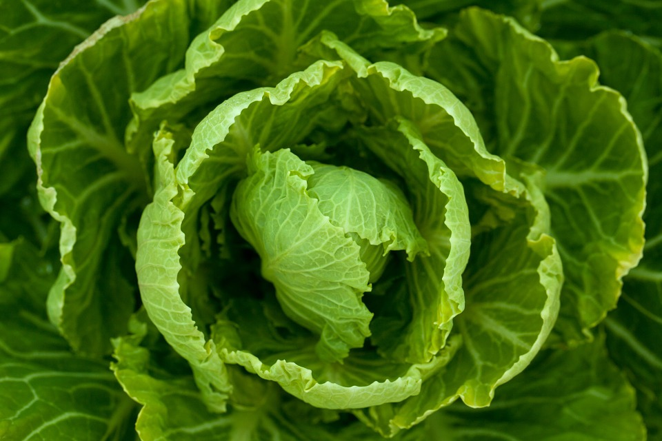 cabbage, cabbage leaves, cabbage flower