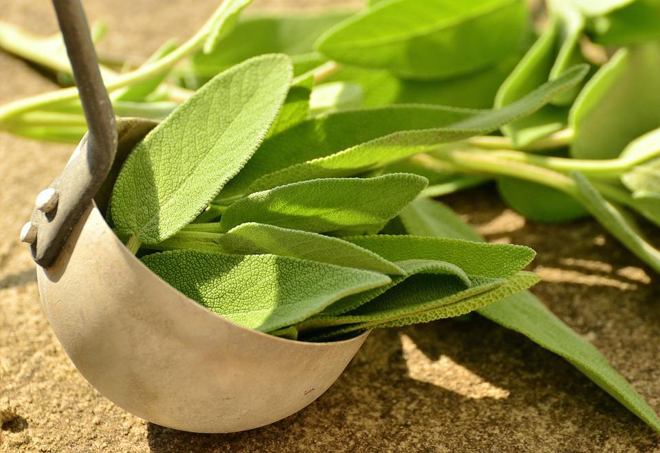 sage, sage leaves, sage plant